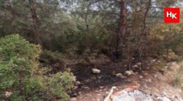 İzmir'de orman yakmak isteyen kişi terörist çıktı!